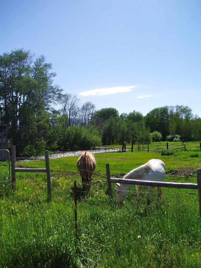 Teton Valley Ranch Horses